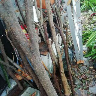 庭の伐採した木