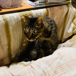 【緊急】お年寄り猫♀の里親を募集します!