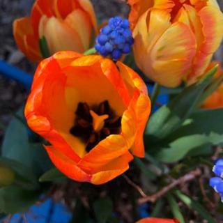 ks flower art  花の王国オランダ式フラワーアレンジ...