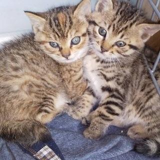 可愛いトラ猫ちゃん兄弟