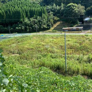 草刈り100㎡1000円から!