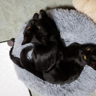 甘えん坊黒猫兄妹