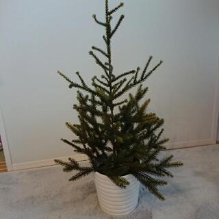 IKEA クリスマスツリー(植木鉢付)