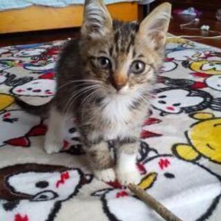 子猫の里親になって下さい(*^^*)