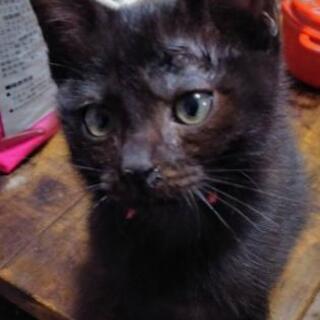 黒猫くん① 里親さん募集