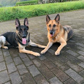 犬のしつけ相談、訓練承ります!