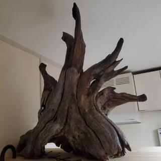 コルク  木の根  ソイル マスターサンド ろ過マット
