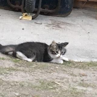 子猫 3匹   生後 3ヶ月