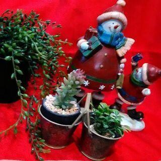 クリスマス フェイクグリーン 多肉植物