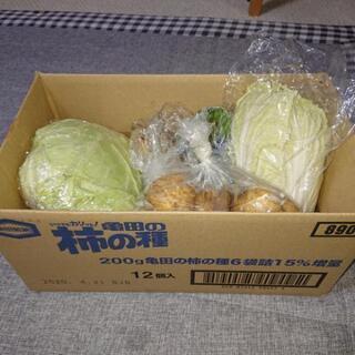 家庭菜園で取れた野菜です。農作物です。