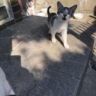 かわいい子猫4匹保護してください。 - 堺市