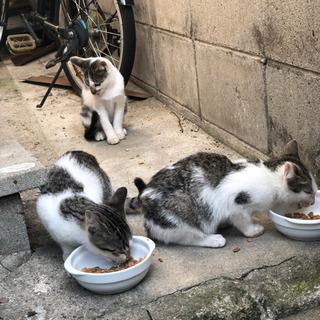 かわいい子猫4匹保護してください。 - 猫