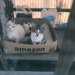 かわいい子猫4匹保護してください。 − 大阪府