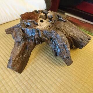 木の根の花台