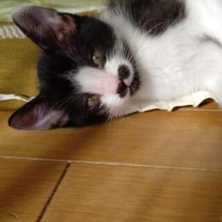 白黒のオス😻生後2ヶ月くらい