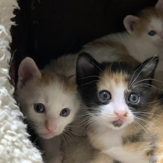 かしこくてやんちゃな子猫3匹