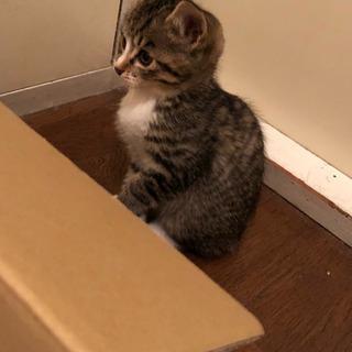 2ヶ月くらいの子猫二匹です。の画像