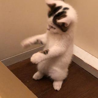 2ヶ月くらいの子猫二匹です。 - 松戸市