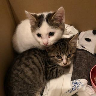 2ヶ月くらいの子猫二匹です。 − 千葉県