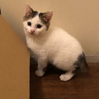 2ヶ月くらいの子猫二匹です。 - 里親募集