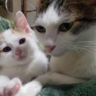 【引渡し先が決まりました】親子猫 4匹