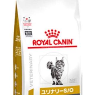 ロイヤルカナン 猫用の画像
