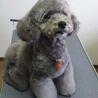 🐾小型犬のトリミングサロン🐾
