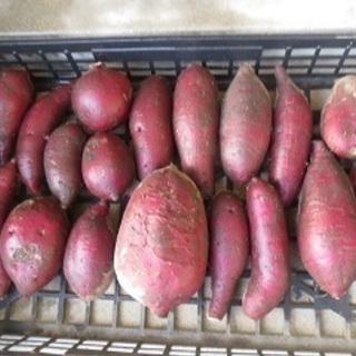 さつま芋(シルクスィート) 5kg ②