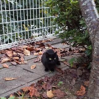 捨て猫 黒猫 かぎしっぽ