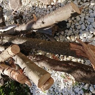 【丸太廃材】奈良市内自宅の大きな枯れた樹を差し上げます‼️