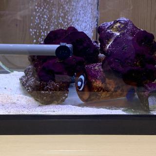 海水魚と水槽一式