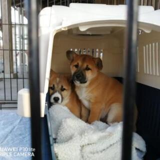 野良犬のお母さんが産んだ2ヶ月位の子犬