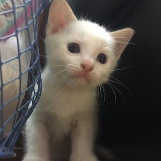 10月1日生まれの白猫兄弟