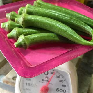 無農薬野菜 オクラ