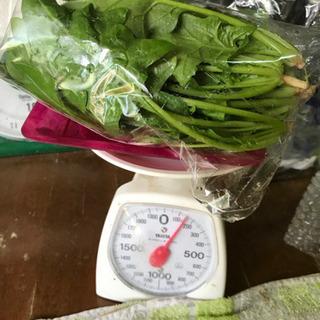 本日17日受付終了‼️無農薬野菜 ほうれん草