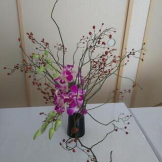 お花を趣味にしませんか🌼q(^-^q)🌼