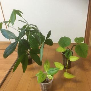 【お取引中】綺麗な観葉植物 4種類