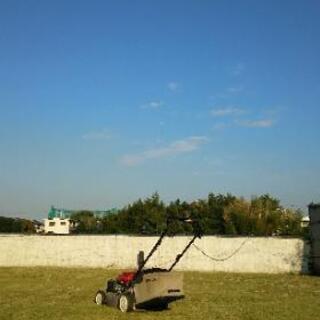 剪定・除草・芝刈り・レンタルグリーン等々 させて下さい!