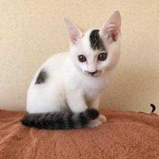 ユニークなヘアスタイルの美子猫(^ ^)