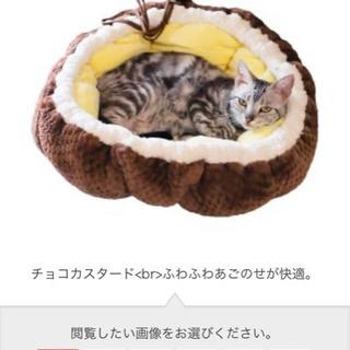 猫ちゃん用ベット&デンタルケアおやつ