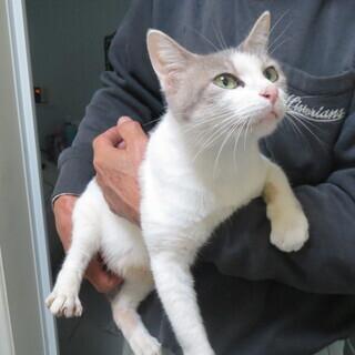 置き去りにされた 母猫、仔猫(3匹)の 里親さんを探しています。