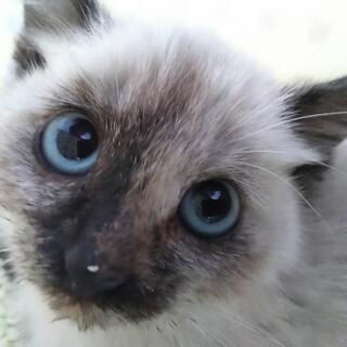 里親様決定!子猫 性別不明 生後1~2ヶ月