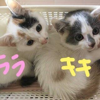 キキ☆ララ 姉妹