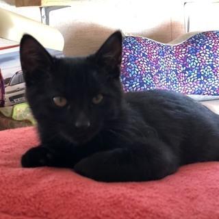 黒猫里親決定