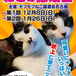 猫の譲渡会 in 名古屋市昭和区吹上町 吹上公園南東