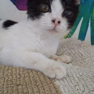 約3ヶ月位のオスの仔猫
