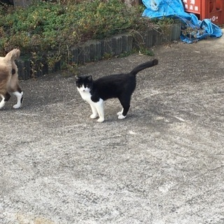 すごく人懐っこいメスの猫ちゃんです。