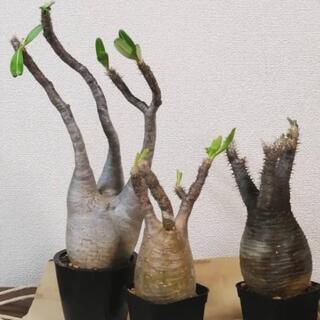 植物色々、お売りします