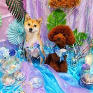 カットモデル犬募集中☆ホテル、送迎有り