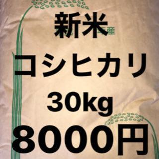 新米 コシヒカリ 30kg